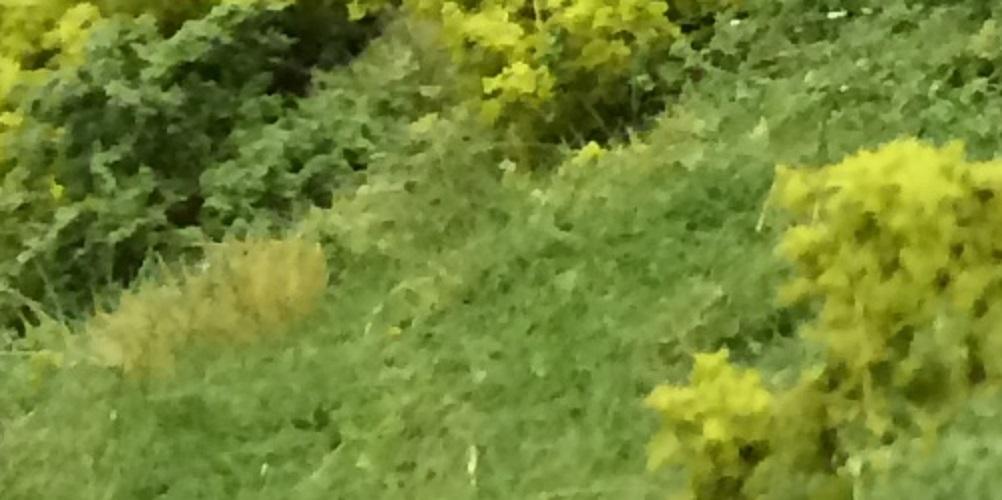 Strooigras, vlokken en mos