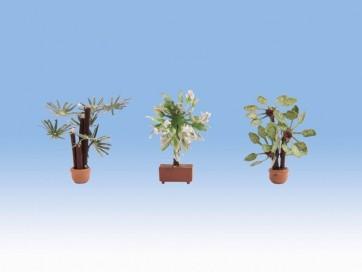 Noch 14023 - Mediterrane Pflanzen