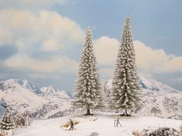 Noch 21966 - Schneetannen