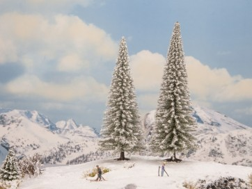 Noch 21965 - Schneetannen