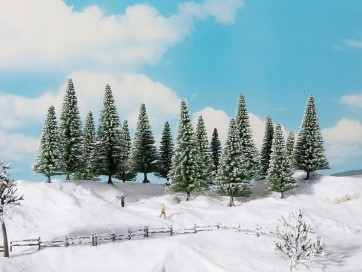 Noch 24680 - Schneetannen