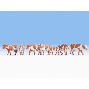 Noch 15726 - Kühe, braun-weiß