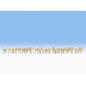Noch 15749 - Schafe