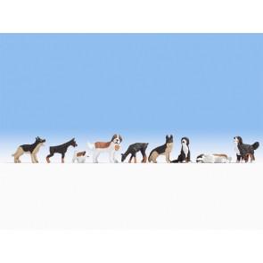 Noch 36717 - Hunde