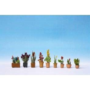 Noch 14012 - Zierpflanzen in Blumentöpfen_02
