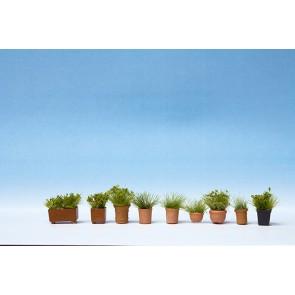 Noch 14032 - Grünpflanzen in Blumentöpfen