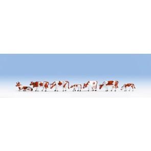 Noch 15723 - Kühe, braun-weiß