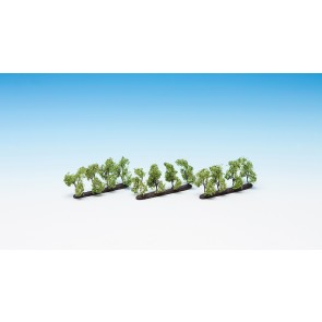 Noch 21530 - Plantagenbäume, 12 Stück, 3,5 cm hoch