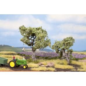 Noch 21995 - Olivenbäume, 2 Stück